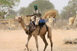 From Camp David to Darfur, With 17 Camels