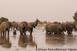 President Obama Signs Anti-Wildlife Trafficking Legislation into Law