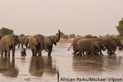 In Welcome Move, China Announces Plan to End Domestic Ivory Trade