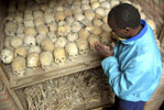 Man Wanted for Genocide in Rwanda to Face Justice